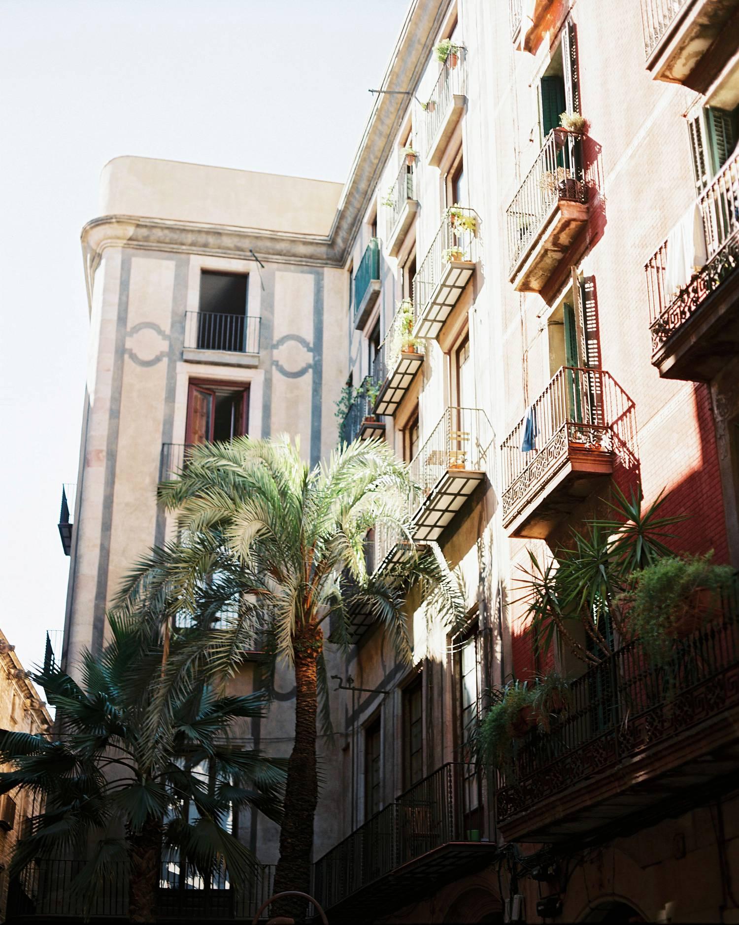 Barcelona downtown palm tree analogue photography