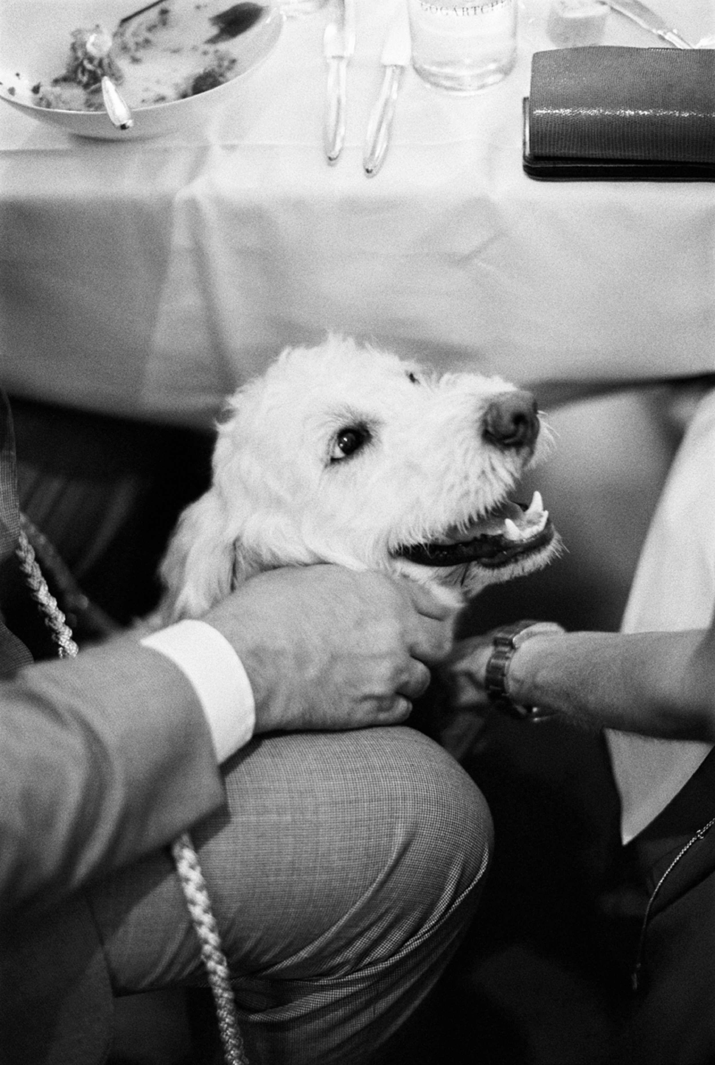dog with bride and groom under table at wedding Hund Hochzeit